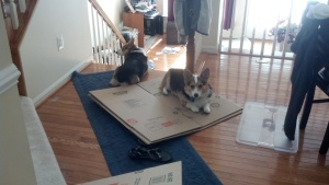 """All quiet for now--but as soon as she puts down her camera and resumes packing, we're eating this cardboard!"""