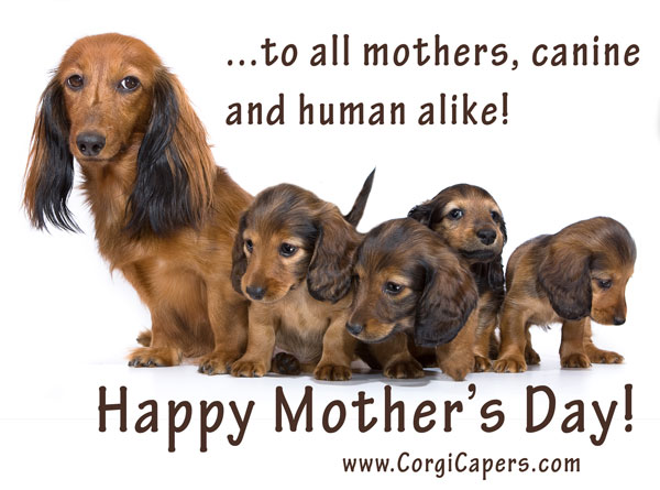 mothers-day-corgi-capers