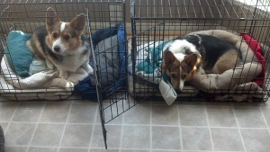 This is what we do now... sit 'n watch 'n wonder about all these boxes. We feel safest in our crates, though. Will you pack us, too?
