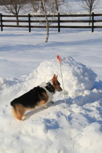 corgi_mountainclimbing