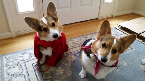 Yoda and Leia, wearing red for Denby. Yoda's cape is a tribute to the Super-Dog.