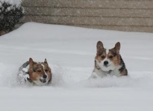 corg-snow