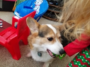 Corgi treat and toddler