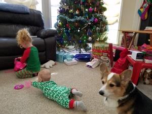 Corgi and children
